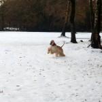 Elvira y Kabul- nieve