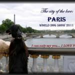 Galgo afgano, afghan hound, lebrel afgano, afganos Escarlata,Vladi y Macarena, Mundial de Paris