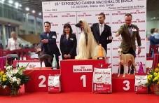 Mejor de raza y grupo 10, Nacional de Braga 2015