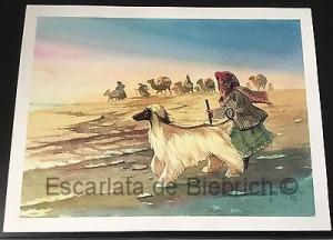 historia-del-galgo-afgano-6